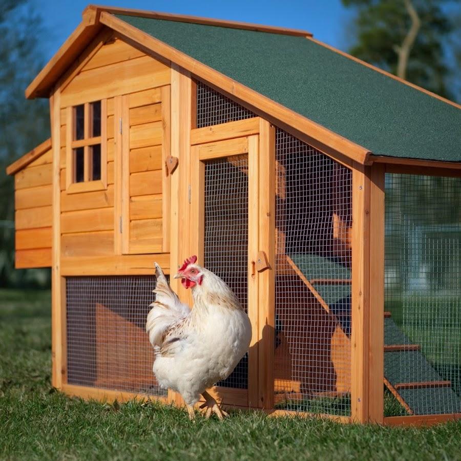 Будка для цыплят