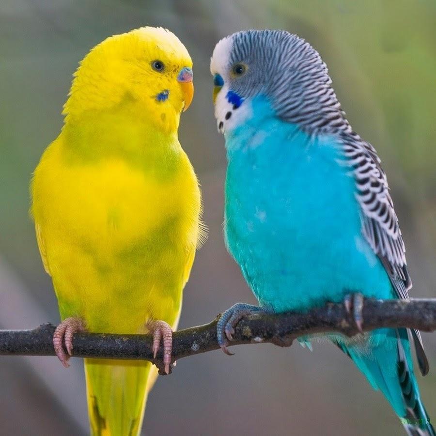Смотри фото секс валнистава попугая 19 фотография