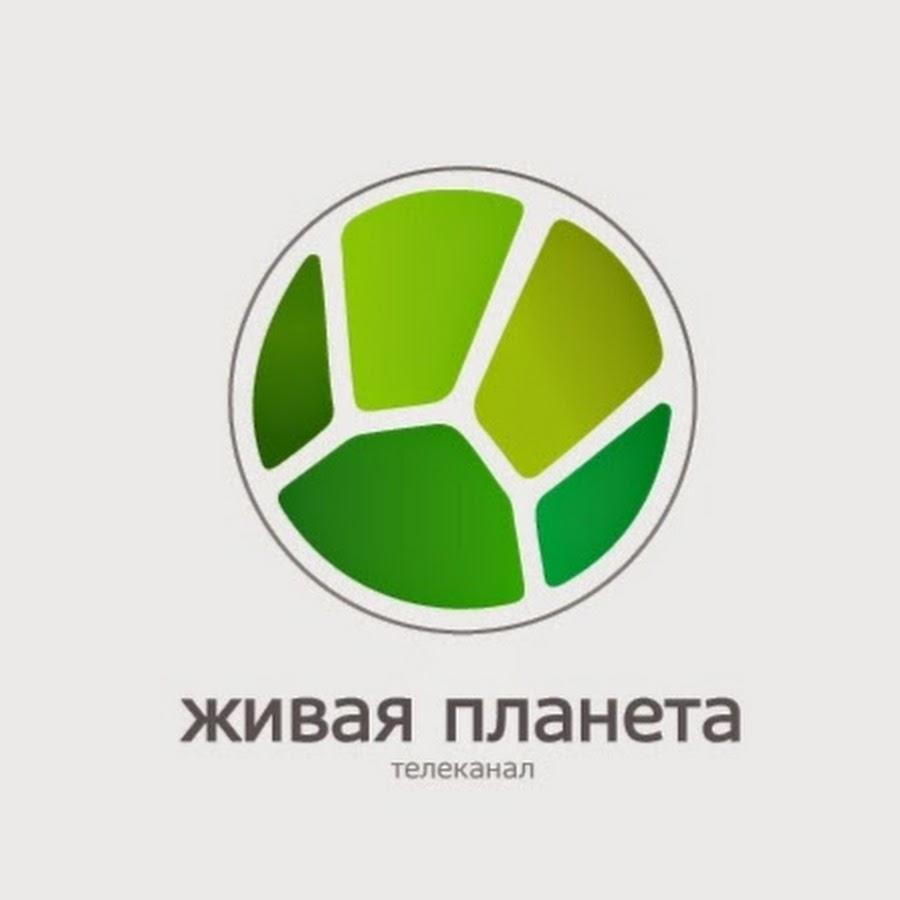 «Живая Планета Телеканал Смотреть Онлайн Прямой Эфир» / 2008