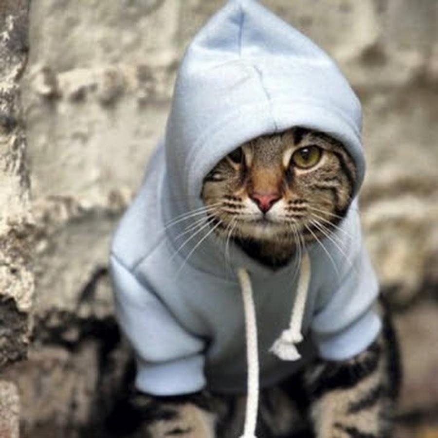 Фото на аву в вк для пацанов кошки
