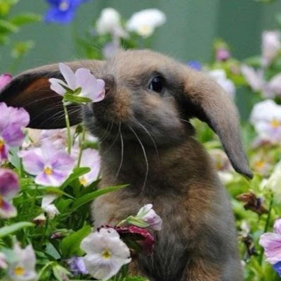 Лучшиеы с кроликом