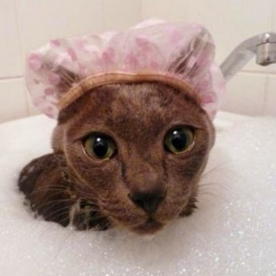 Как сделать так чтобы кот не боялся тебя