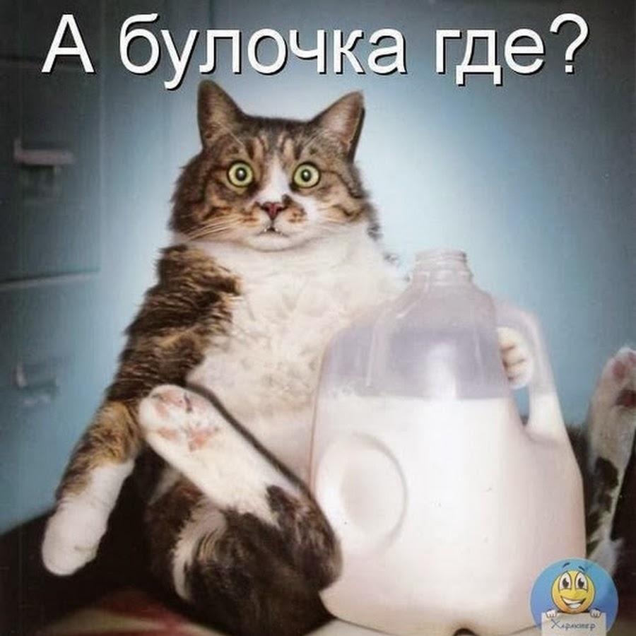 Ты мое блюдце с молоком 13 фотография