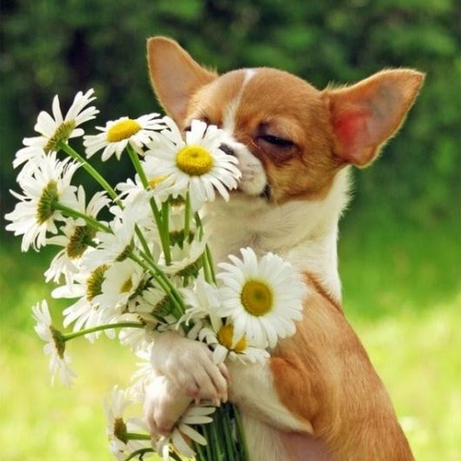 Поздравление для любителя животных