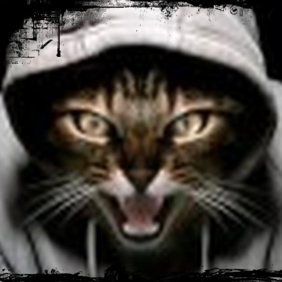 Коты - Скачать бесплатно - Прикольные картинки, авы