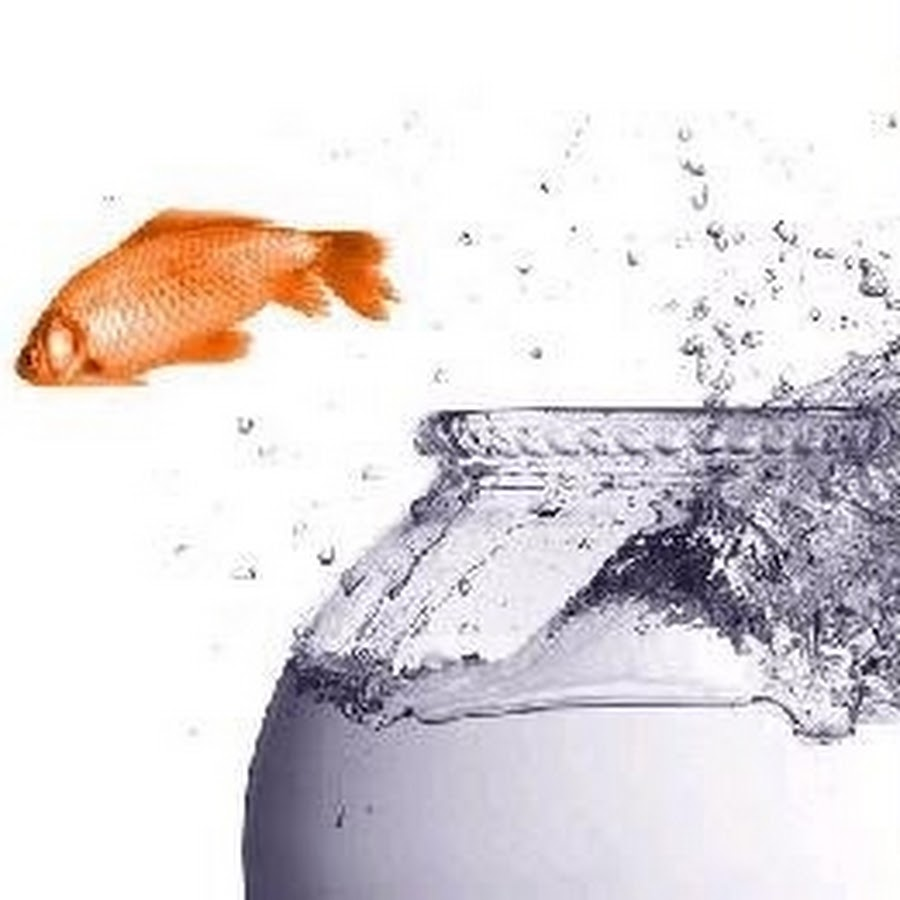 27 awesome fish out of water idiom images
