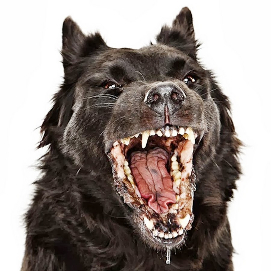 Dog with rabies foaming at the mouth