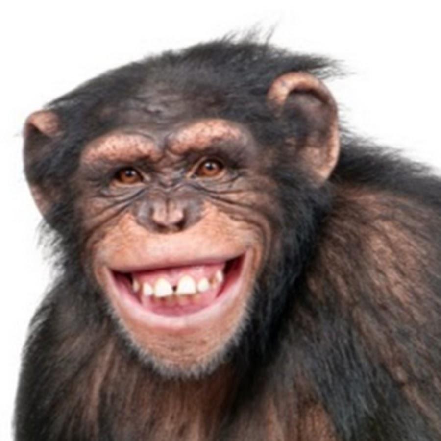 Simpanse fuked women tube hentia galleries
