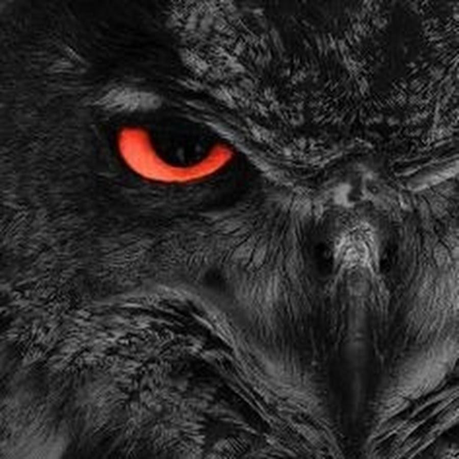 совы на черном фоне картинки