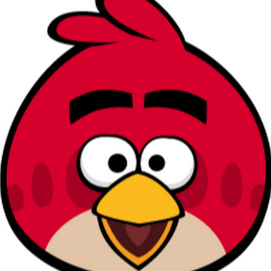 Angry bird red bird