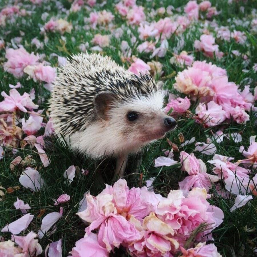 Фото ежика с цветком