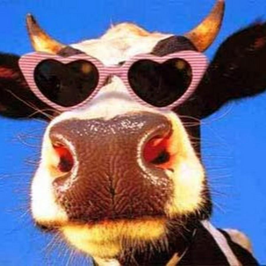 Cow's fucking wallpapers xxx photo