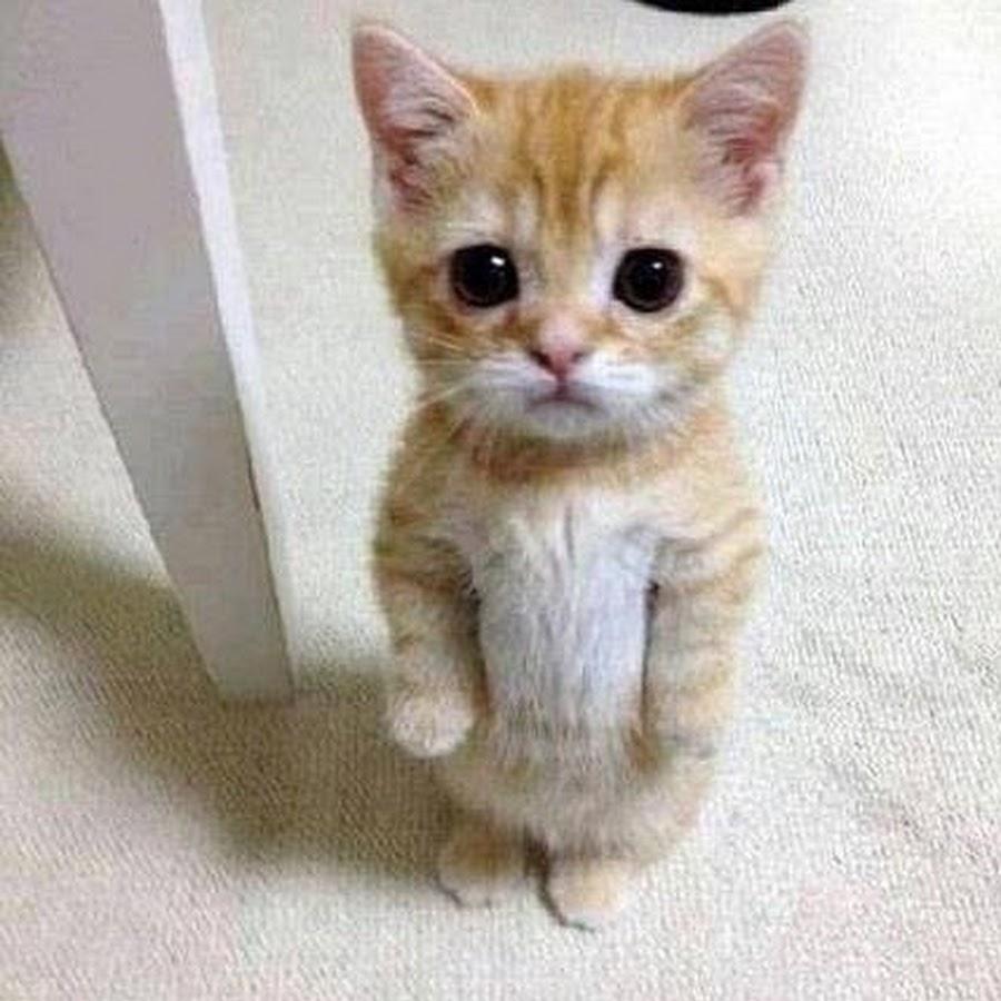 Сколько лет lil miss kitty 21 фотография