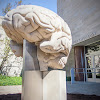 IUB Psychological & Brain Sciences