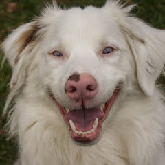 Keller The Double Merle