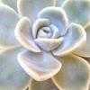 Elaine Vieira Crie e Recrie Lembrancinhas