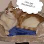 Cats Wear Valley & Darlington