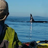 Discovery Sea Kayak Tours and Bike Rentals