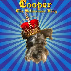 CooperTheSchnauzerKing