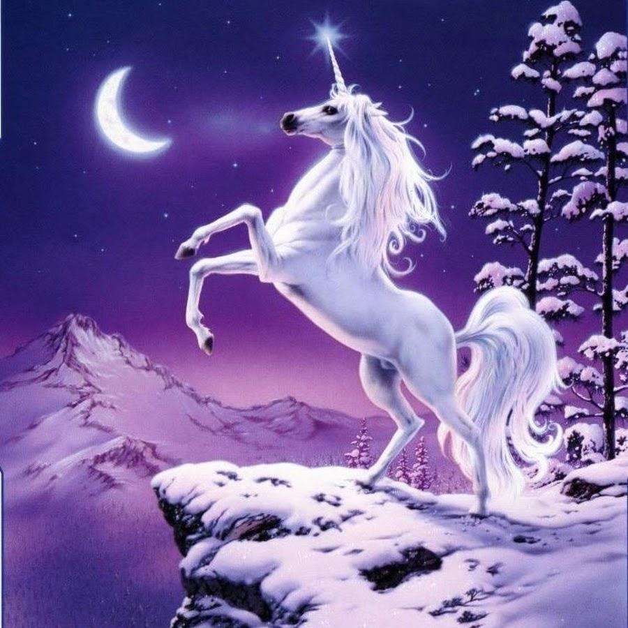 Лошадки (Horseland) - раскраски (24 шт.)