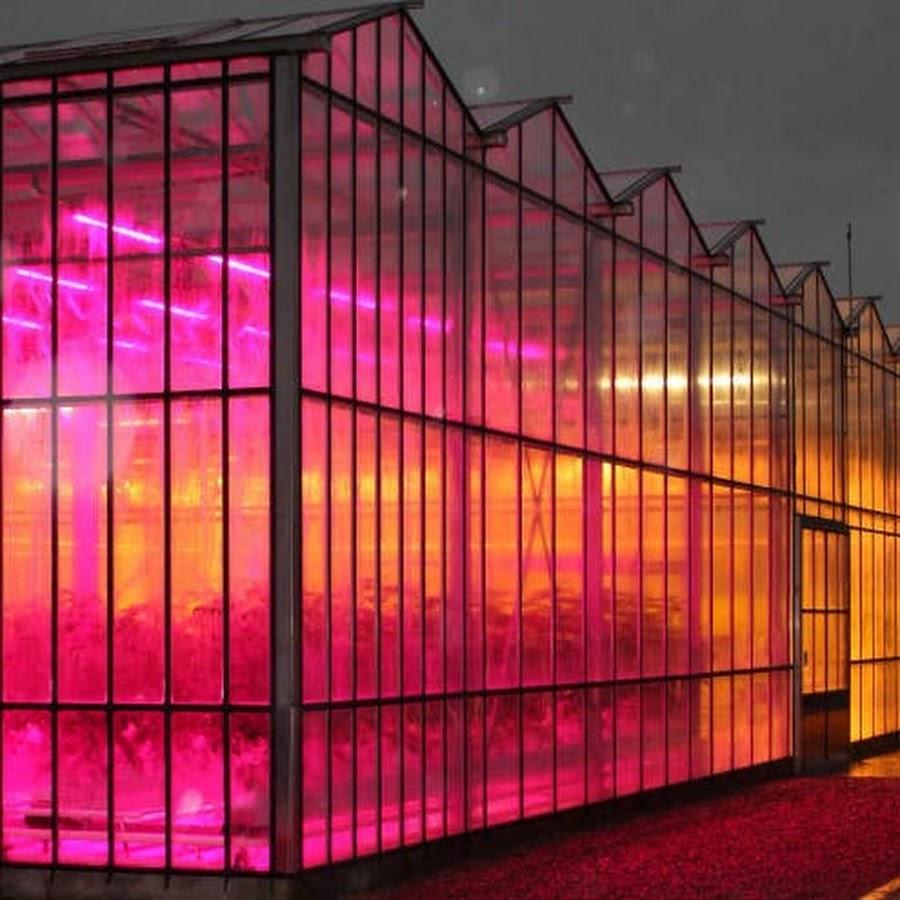 сегодняшний светодиодные лампы для теплицы зимой накладная