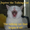 Talking Cats!