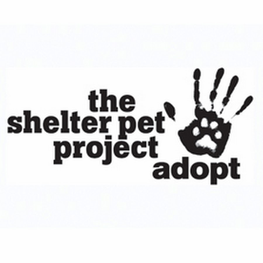 the pet shelter project Animal shelter lesson plans and worksheets from thousands of teacher-reviewed resources to help you inspire students learning.