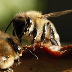 Včelaříci / How to lead a beekeeping club