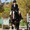 lovehorses4ever97
