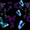ButterflyBookWorm