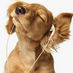 PAWSitively Petland Radio Show - Havanese, Training Your ...