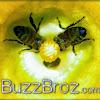 BuzzBroz