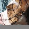 DogsNeedOurVoices