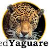 Red Yaguareté