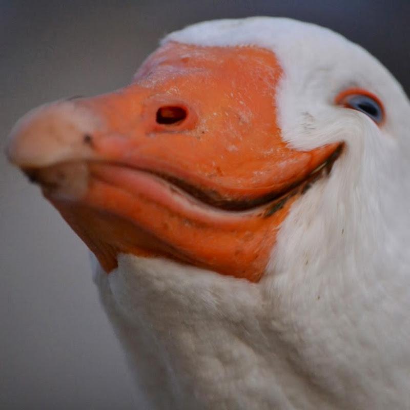 Dolan Darker