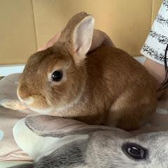 Natsu Aikawa