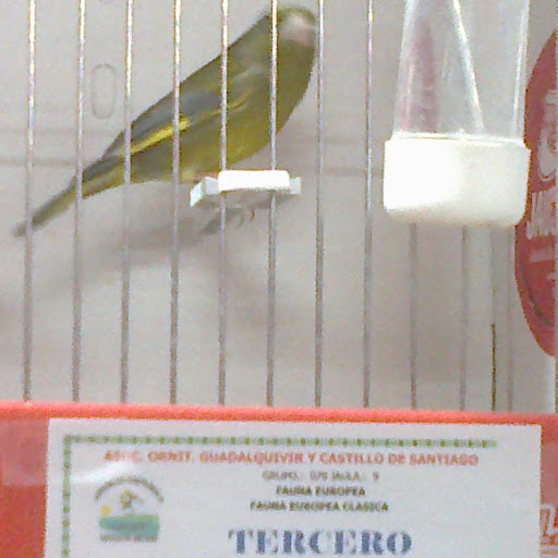VerdoneroSanlucar vs