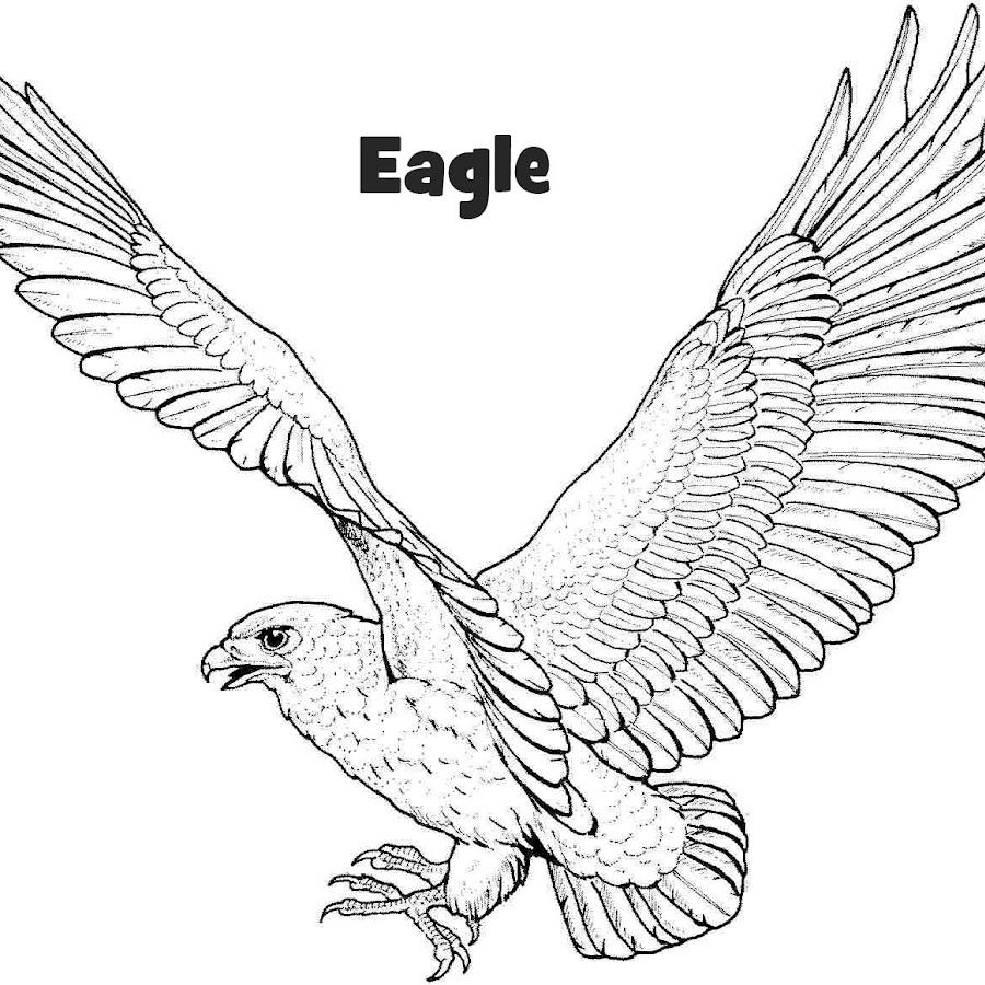 Eagle  Coloring Page Birds  BigActivities
