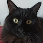 Minnie Colors