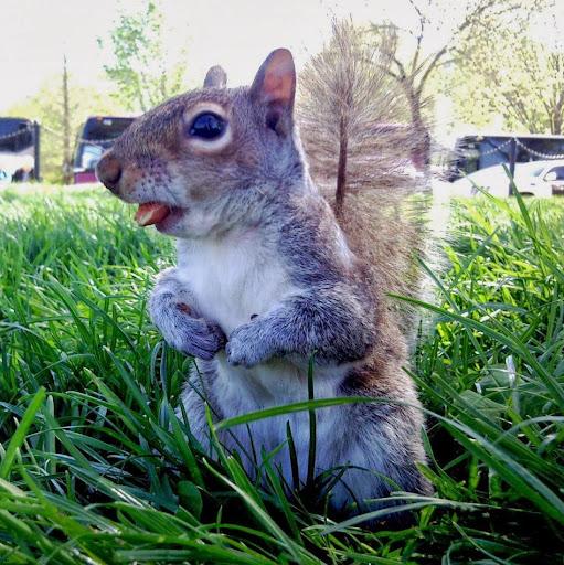 scootersquirrel32