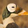 AudubonAlaska