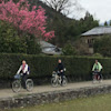 自転車京都