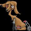 timedogthehorse
