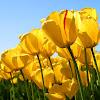 bella flower