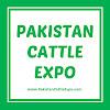 Pakistan Cattle Expo / Cow Mandi 2017