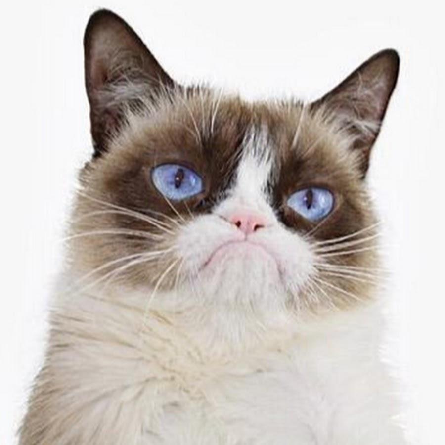 scottish wildcat kittens for sale