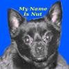 Cute Chihuahua Everybody Loves Nut