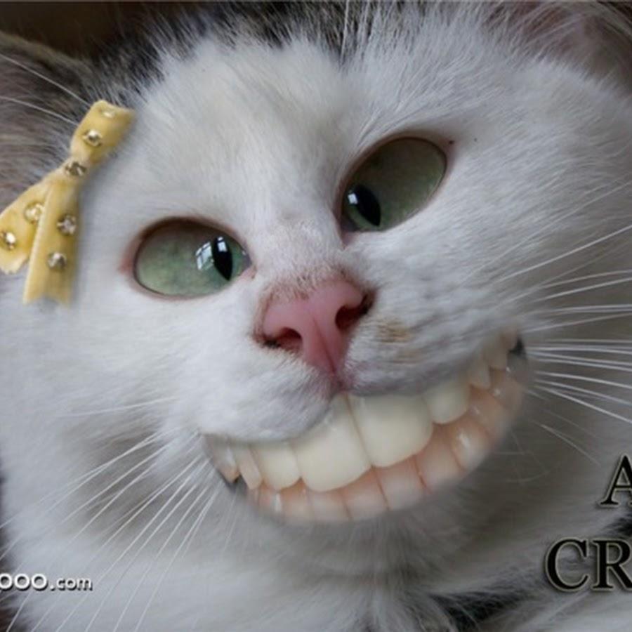hilarious cat faces