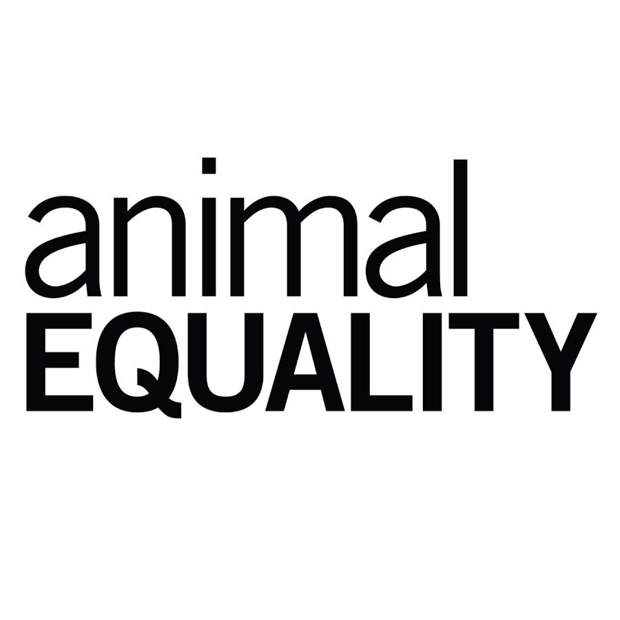 Animal Equality - YouTube