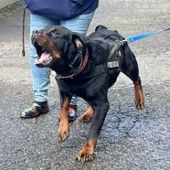 Sonia Leyva